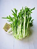 Puntarelle (italienische Salatsorte, Zichorienart) und Mörser und Gemüsereibe