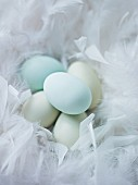 Blue eggs in a nest of soft feathers