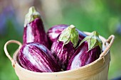 Striped aubergines in a wooden basket