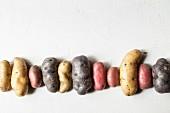 Reihe von verschiedenen Kartoffelsorten