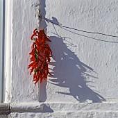 Chilischoten trocknen an einer Hauswand (Apulien, Italien)