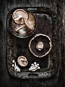 Stillleben mit gemischten Pilzen auf altem Tablett