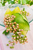A bouquet of unripe redcurrants and hosta leaves on a glass cake stand as table decoration