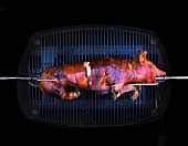 A suckling pig being grilled