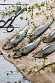Fresh, raw sardines sprinkled with salt and thyme