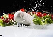 Mozzarella fällt spritzend in Milch, Strauchtomaten und Salatblätter im Hintergrund