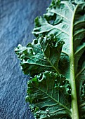 A freshly washed green kale leaf on a slate surface