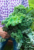 A man holding freshly harvested organic green kale