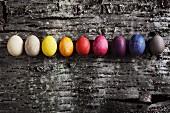 Im Sud von verschiedenen Rohstoffen gefärbte Ostereier auf Kirschbaumrinde