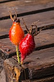 Two rosehips stuck into a wooden crate