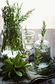 Various herbs in glass containers