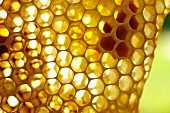 Bienenwabe (Nahaufnahme)