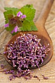 Dried deadnettle flowers for wild herb tea on a wooden spoon