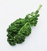 Frisches Grünkohlblatt