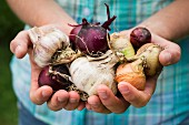 A girl holding various types of self-harvested onions and garlic