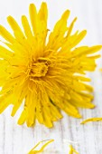 A close-up of a dandelion on white wood