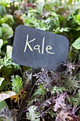 Kale at a farmer's market