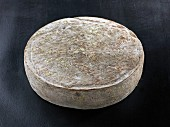 St. Nectaire (French cow's milk cheese)