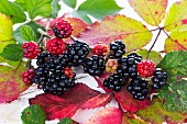 Blackberries with autumnal leaves