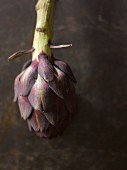 A purple artichoke with a stalk