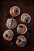 Blueberry muffins in white cases
