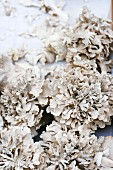 Maitake mushrooms (Grifola frondosa) also known as ram's head mushrooms on a market stall