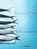 Fresh mackerel on parchment paper