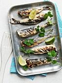 Baked tikka masala sardines