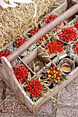 Posies of rosehips and heather in wooden crate
