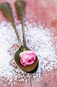 A pink rose on spoons surrounded by icing sugar