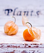 Physalis on a weathered wooden surface