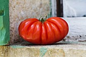 A large beefsteak tomato on a window ledge