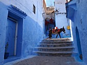 A man with a pack donkey in a blue alleyway in the Medina of Chefchaouen, Morocco