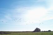 Zugvögel über der Vorpommerschen Boddenlandschaft