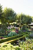 Niedrige Hecken um Rabatten mit blühenden Blumen in angelegtem Garten