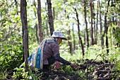 Thailändische Frau bei der Pilzsuche