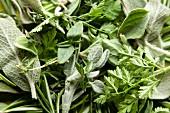 Various fresh herbs (full frame)