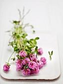 Flowering clover