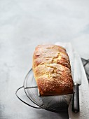 Quark brioche with icing sugar