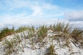 Dunes at Darss on the Baltic Sea