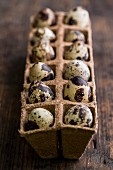 Quail's eggs in an egg box