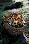 Basket of fresh forest mushrooms