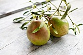 Two Vereinsdechant (Doyenne du Comice) pears and a sprig of mistletoe on a wooden surface