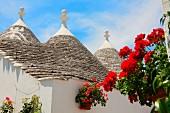 Trulli-Häuser in Alberobello (Italien)