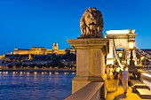 Die Kettenbrücke mit der Löwen-Statue in Abenddämmerung, Blick auf den Burgpalast, Budapest, Ungarn