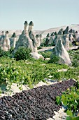 Grapes drying in a vineyard and cone houses, Cappadocia, Anatolia, Turkey