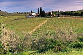 Vineyards at San Donato, Chianti, Tuscany, Italy