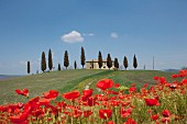 Bright poppies on a Tuscan hillside with a country house in the background, Pienza, Tuscany, Italy