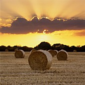 Hay bales in a stubble field at sunset, East Sussex, England