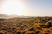 Wolwedans, NamibRand Nature Reserve, Namibia, Africa - 'Dune Camp' at sunrise